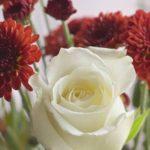 Valentine's Day ByTorinmo Salau